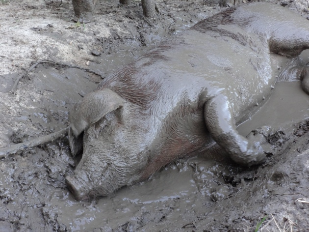 Mud is bliss.