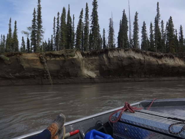 Isn't this cutbank on the Yukon extraordinary? It's something like 25 feet of sand with a think layer of soil on top. We stopped to watch chunks of sand the size of my torso fall from the bank and plunge into the river.