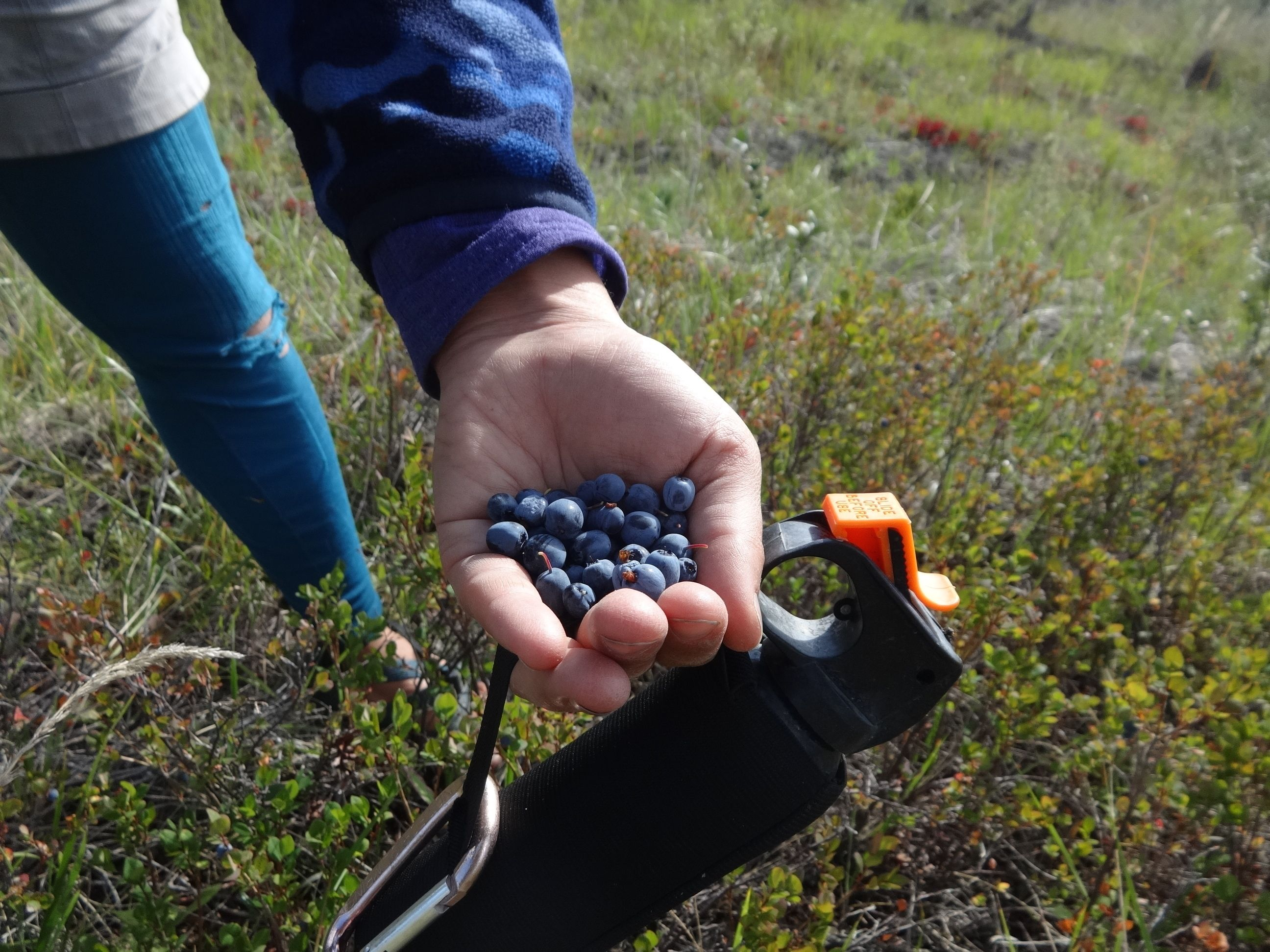 bear spray and berries