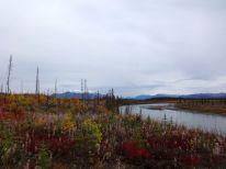 fall colors junjik