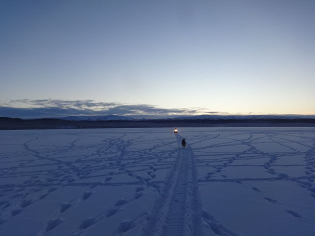 daazhraii caribou tracks.jpg